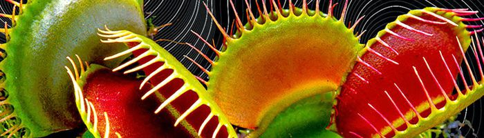 Venus Flytraps Have Magnetic Fields Like the Human Brain